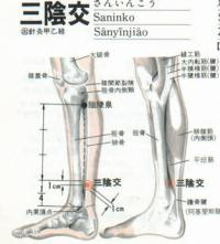 三阴交-解剖图