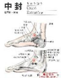 中封-解剖图