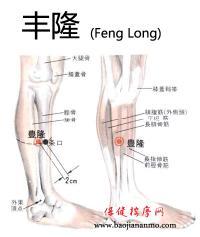 丰隆-解剖图