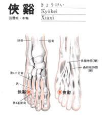 侠溪-解剖图
