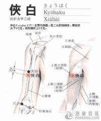 侠白-解剖图