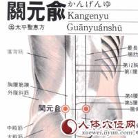 关元俞-解剖图