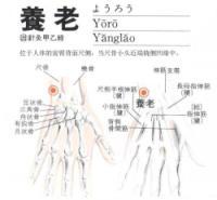 养老-解剖图