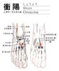 冲阳-解剖图