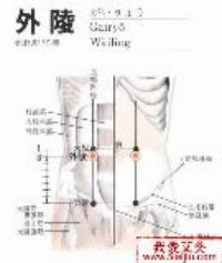 外陵-解剖图