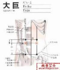 大巨-解剖图