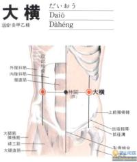 大横-解剖图
