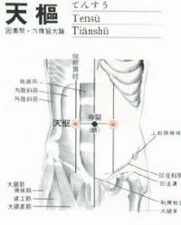 天枢-解剖图