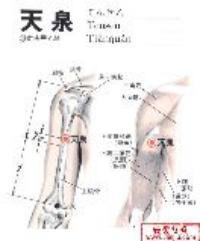 天泉-解剖图
