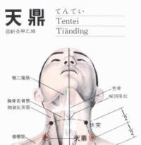 天鼎-解剖图