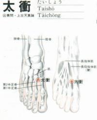 太冲-解剖图