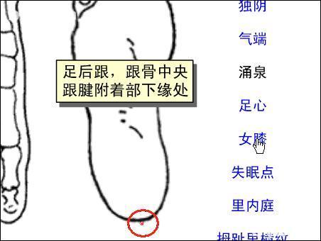 女膝-体表示意图