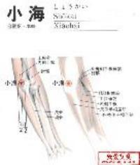 小海-解剖图