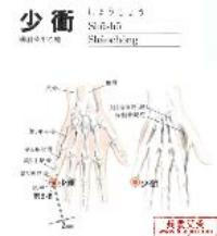 少冲-解剖图