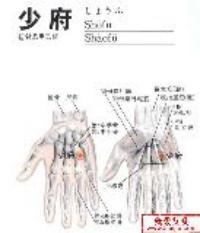 少府-解剖图