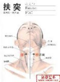 扶突-解剖图