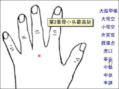拳尖-体表示意图
