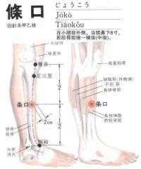 条口-解剖图
