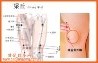 梁丘-解剖图
