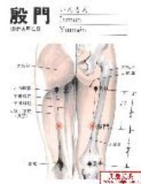 殷门-解剖图