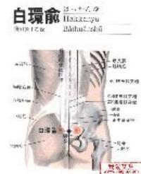白环俞-解剖图