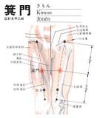 箕门-解剖图