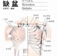 缺盆-解剖图