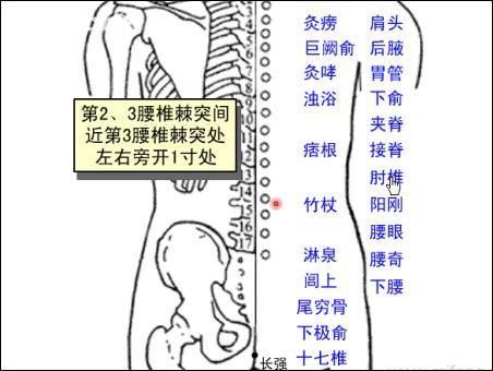 肘椎-体表示意图