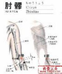 肘髎-解剖图