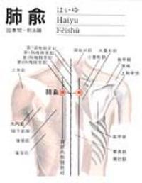 肺俞-解剖图