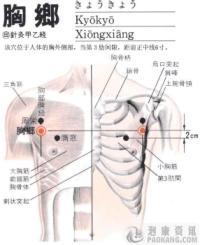 胸乡-解剖图