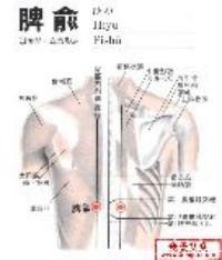 脾俞-解剖图