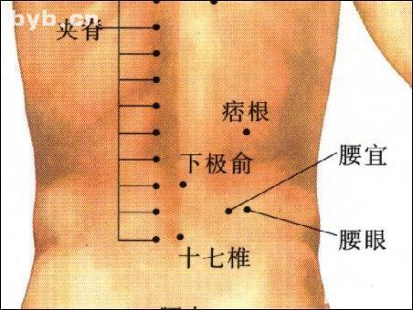 腰眼-体表示意图