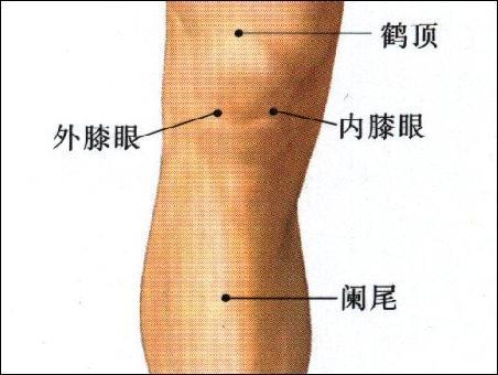 膝眼-体表示意图