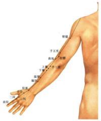 臂臑-体表示意图