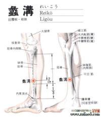 蠡沟-解剖图