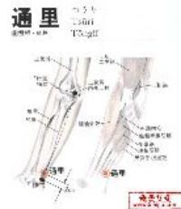通里-解剖图