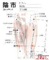 阴市-解剖图