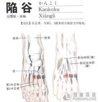 陷谷-解剖图
