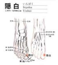 隐白-解剖图