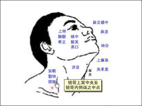 颈臂-体表示意图