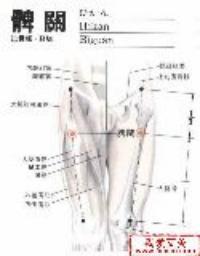 髀关-解剖图