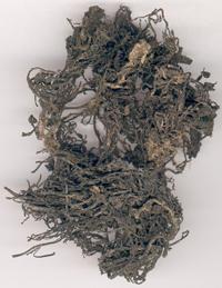 海藻-药材