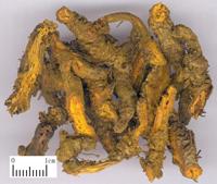 黄连-药材