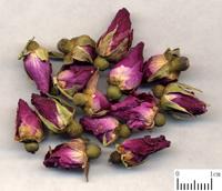 玫瑰花-药材