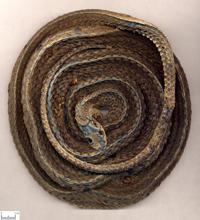 乌梢蛇-药材