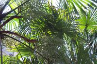 棕榈炭-原态